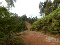 #9: Road 400 m from the Confluence