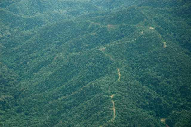 Aerial photo (from Twin Otter) showing old logging road.