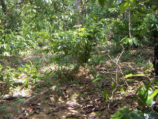 The area of the confluence. The small clearing in the low forest and bush land is about 10 m wide.