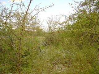 #1: Thick bushes take the view at the confluence spot. The other photos were taken from behind the next row of bushes.
