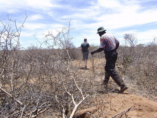 Walking through the dry bush