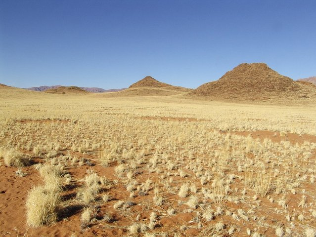 View showing more fairy circles