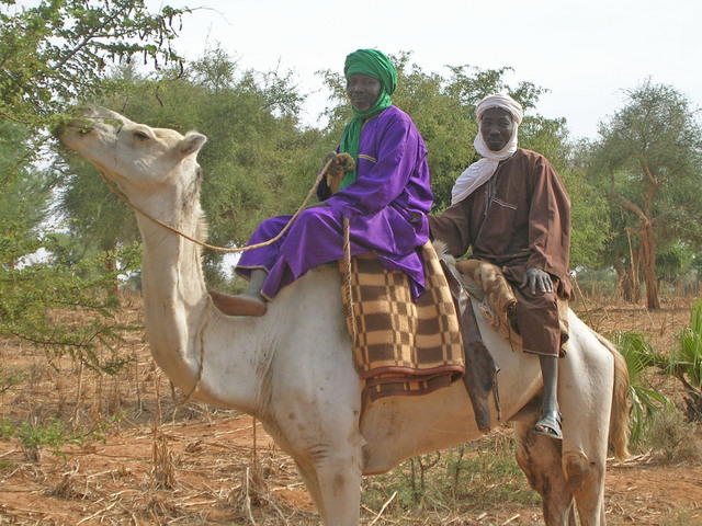 Two of the many Hausa farmers we talked to about farming practices