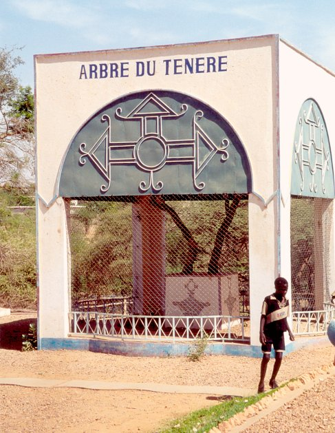 Branches of Arbre du Ténéré at the National Museum.