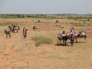 #1: Fulanis moving towards confluence 13N 7E in the Republic of Niger