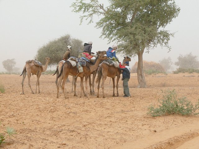 The cameleers heading north to Niger, chatting with Chris