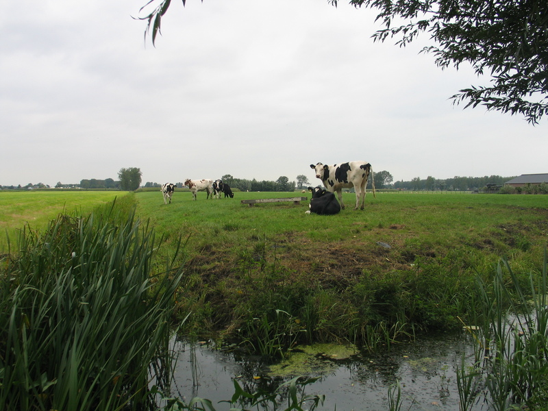 Typical Dutch landscape about 1 km from the confluence point