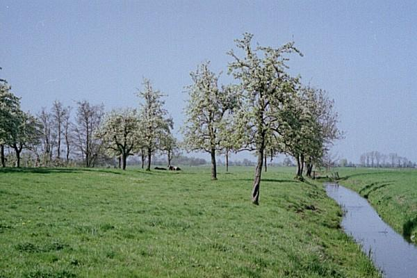 With a typical orchard