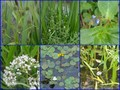 #9: Plants in the ditches around the CP