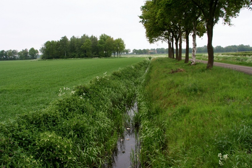 Drainage channel along the field