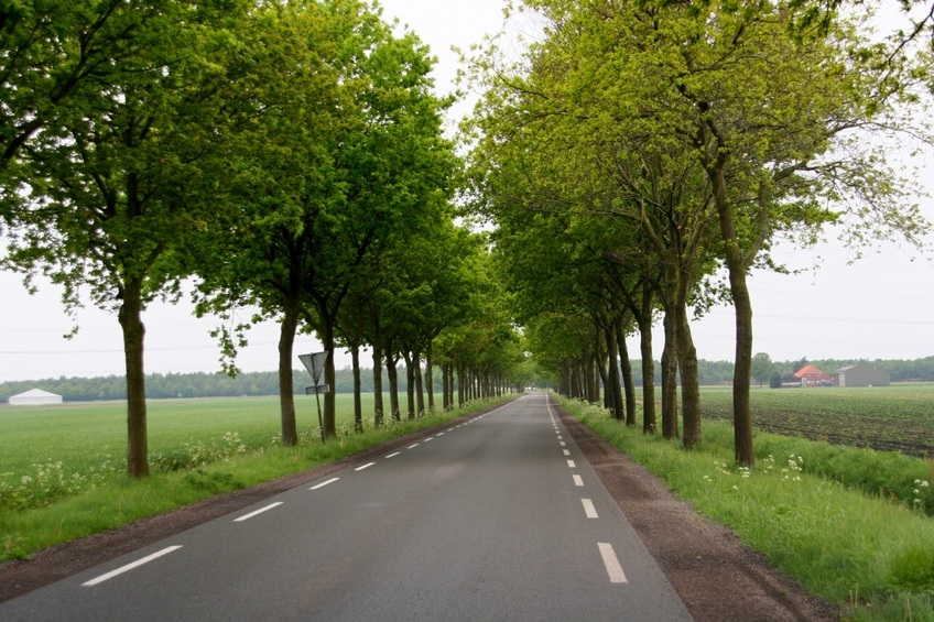 Typical Dutch road in this area