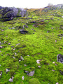 #3: Iridiscent green moss about 80 m from the point