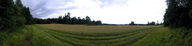 #2: View from the edge of the field, 15 m away