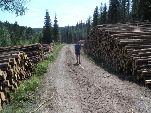 Fredrik between a pair of lumber stacks