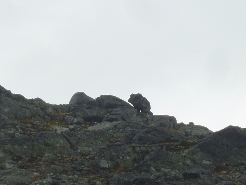 Is that a mountain bear, or just a rock?