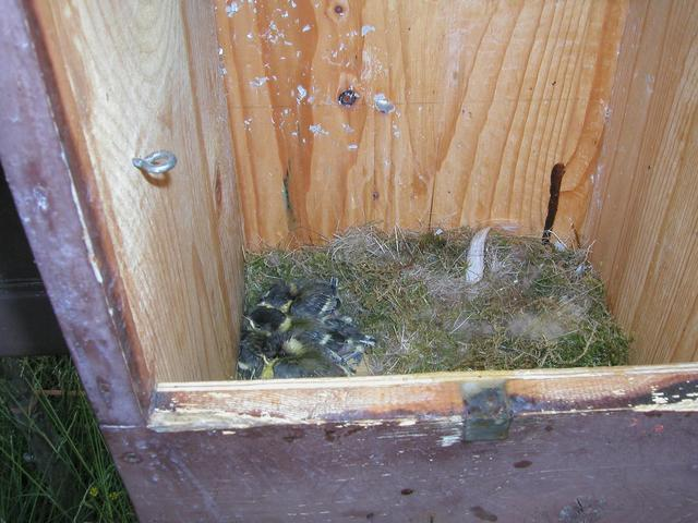 Birds nesting in the toll box