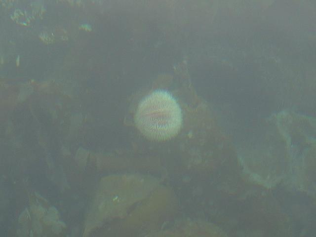Very clear water on the Coast / Seeigel in ca.5 Meter