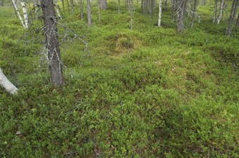 #1: The confluence point lies on mossy ground in a thinly-spaced forest