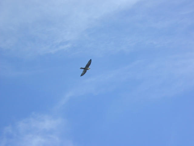 Two hawks and an eagle were circling the confluence.