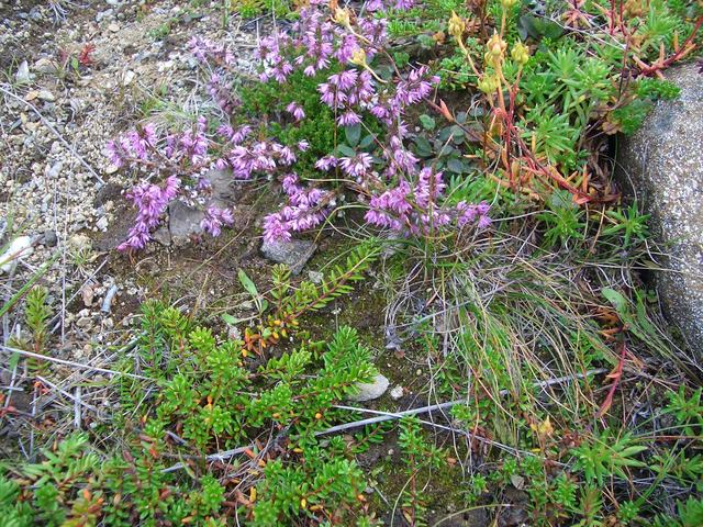 Flowers in the heather and wilderness