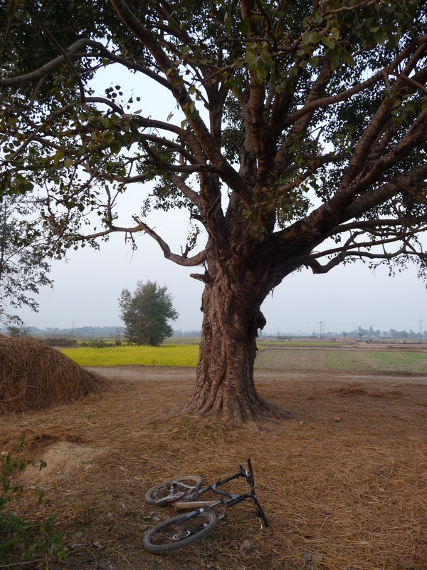 Stopped under a tree on the way back to Birgunj