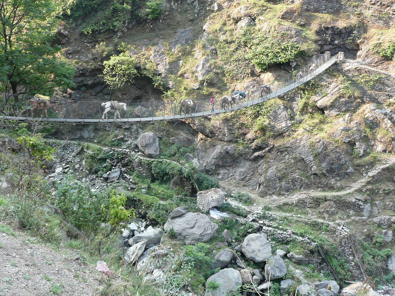 The mule train crossing the suspension bridge at Khaulighat