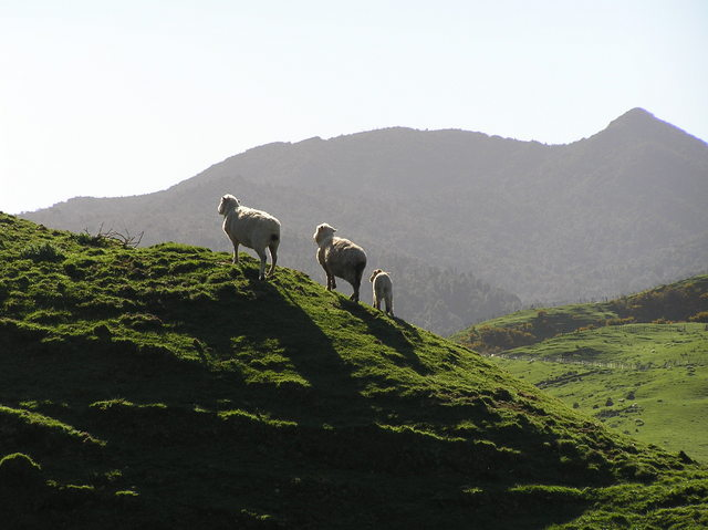 My favorite image from 38 South 175 East - looking east on the sheep on the skyline, 250 meters south of the confluence.