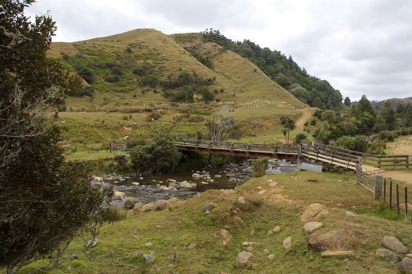 A view of the wooden farm bridge crossing the stream (with many sheep in the background) - about 350 metres from the confluence point
