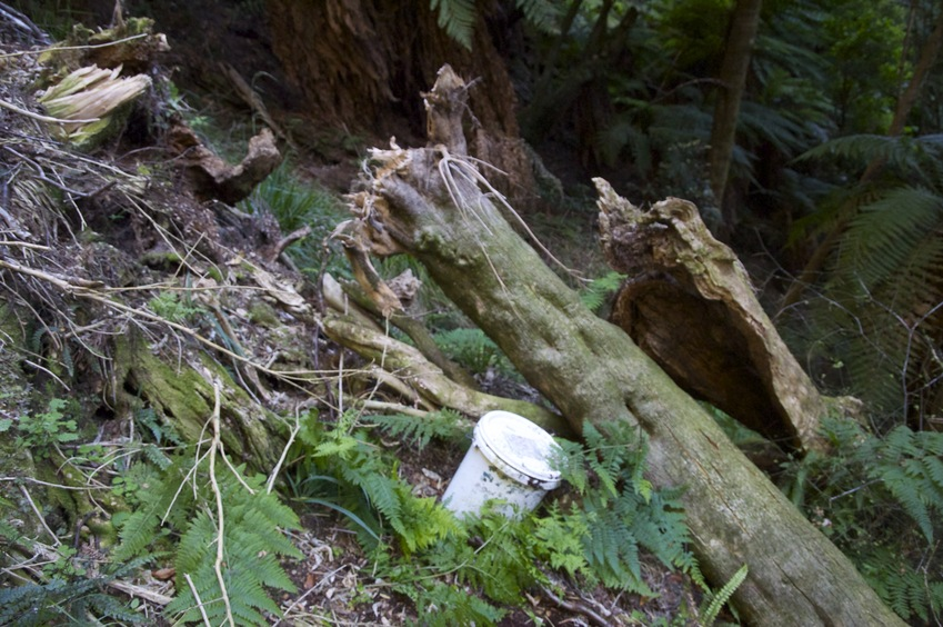 The confluence point lies on a steep hillside.  (The white plastic bucket is a 'geocache', left by a previous visitor.)