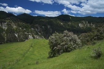 #1: View South (towards the Mohaka River - not visible here)