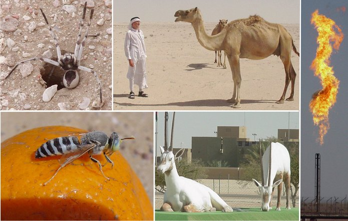 Contrasting world of desert animals and gas industry from Oman