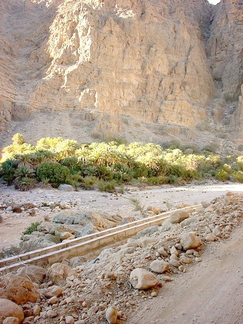 Palms under the sheer cliffs. Also: A Falaj, a water channel.