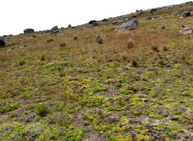 Tundra grasses and boulders