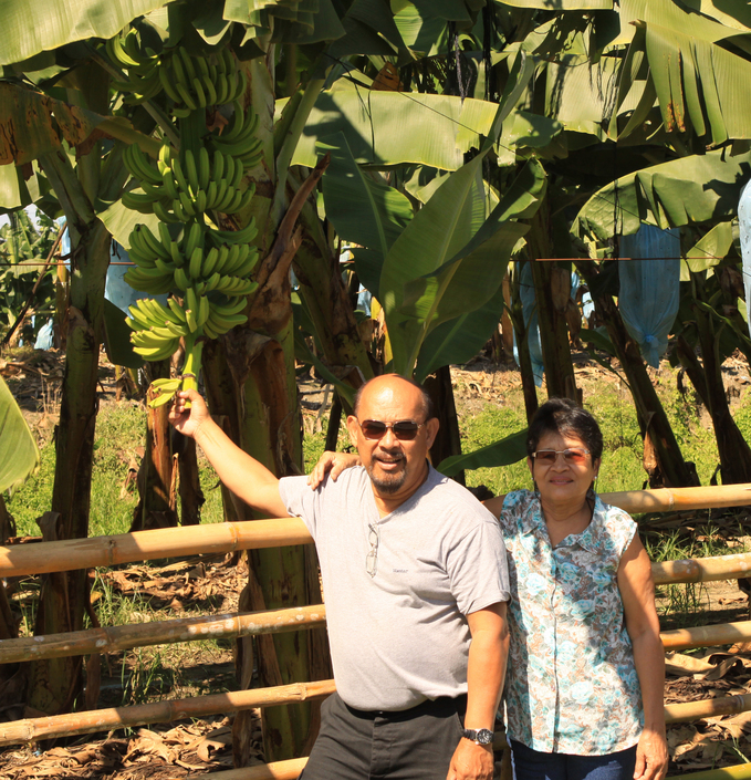 Touching the Cavendish variety banana at TADELCO, the biggest banana plantation owned by Floreindo