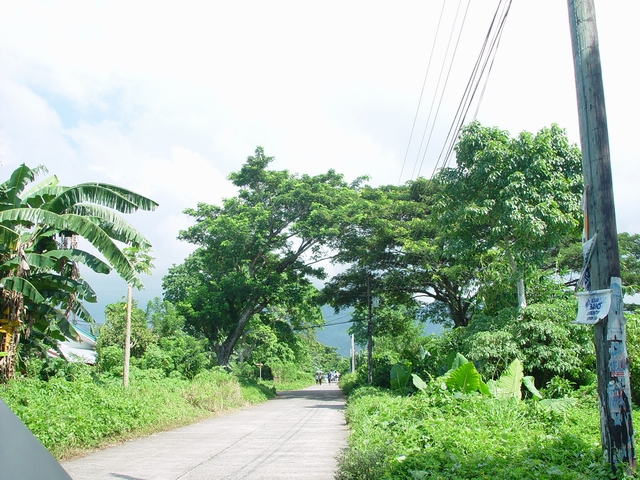 The road leading to the subdivision.