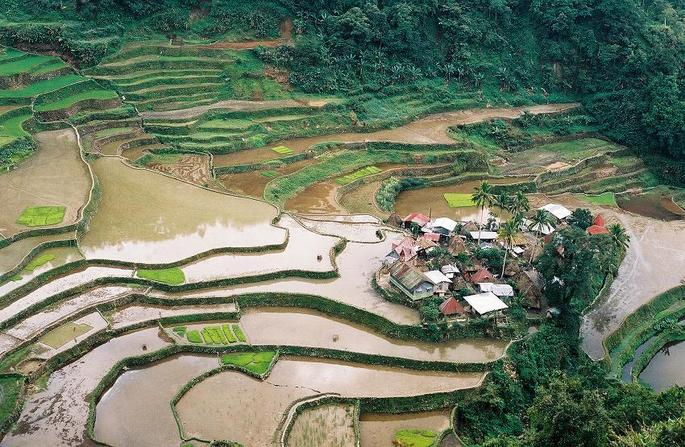 Nearby Ifugao rice terraces.