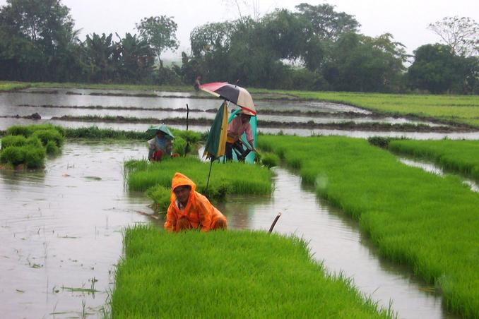 Rain is good time to plant rice along the road of San Jose