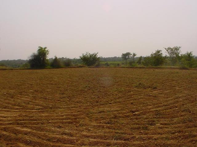 A view of the field, the confluence view