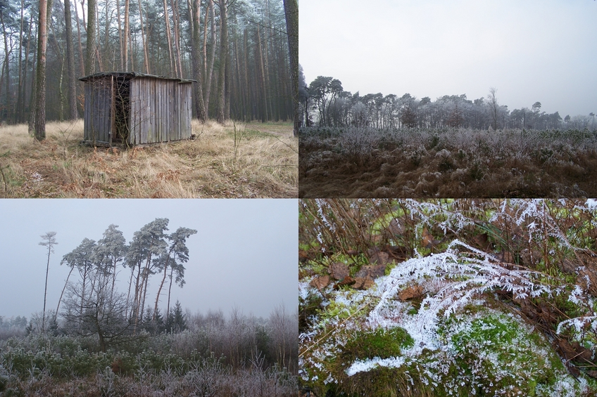 Nearby shed and winter landscapes