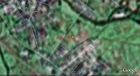 #8: Our track on the satellite image (© Google Earth 2009)