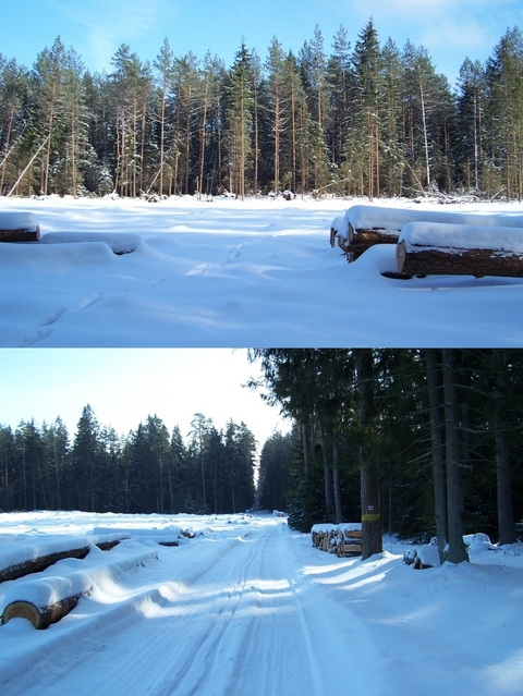 Glade (with my footsteps in snow) and the nearby blue marked tourist path