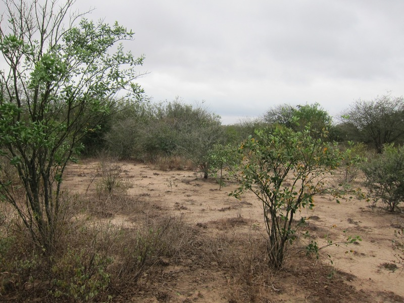 Typical scrubland