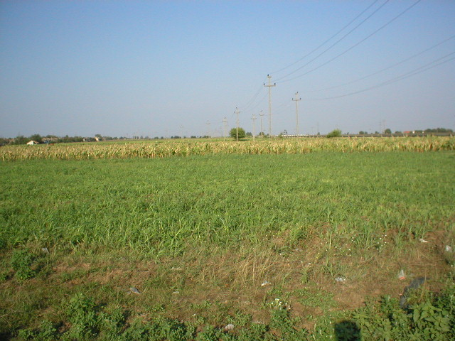East view - corn field.