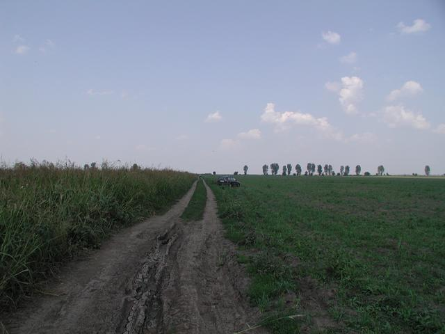 Weg am Maisfeld / Track along the corn field