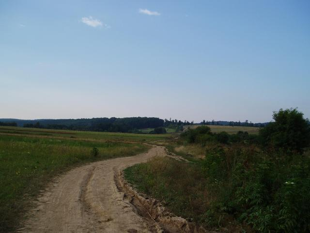 Drumul spre padure/ Road towards the forest