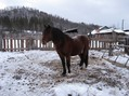 #7: Мерин на меридиане/The horse on meridian