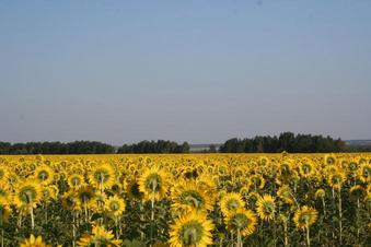 #1: General area (sunflowers nearby)