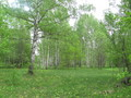 #6: Forest in May
