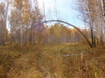 #9: ... и под березами/... and under birches