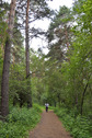 #8: Path in Inyushinskiy wood
